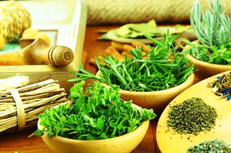 95 remedios caseros con plantas medicinales