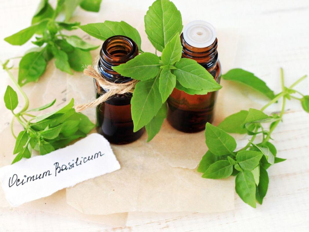 Basil for alopecia