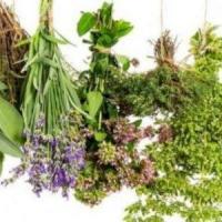 Hyperprolactinemie herbes