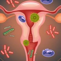 Infeccao vaginal bacterias 0417 1400x800