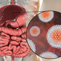 L hepatite