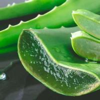 Les feuilles de laloe