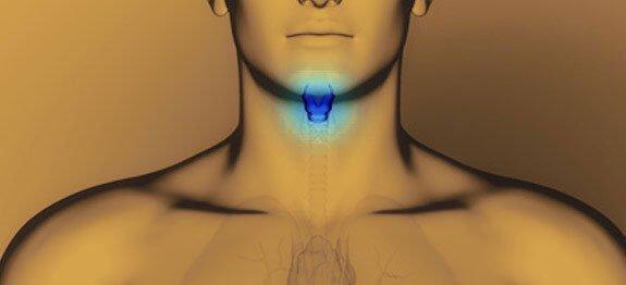 Reguler thyroide