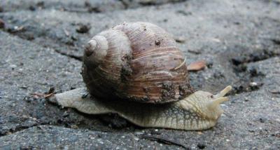 Snail slime skincare 02