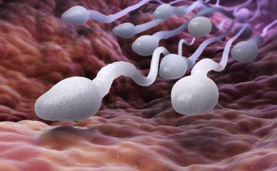 Sperme spermatozoides